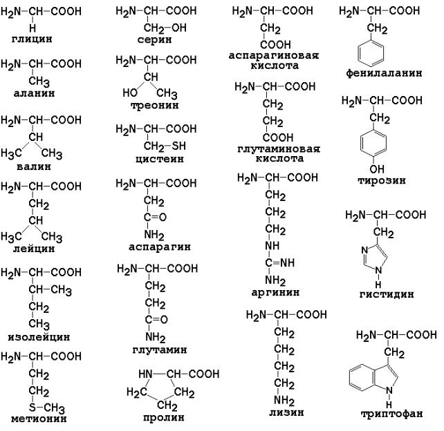 aminozuren lijst